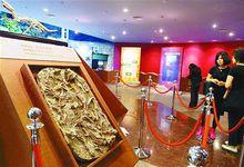 上海生物进化科普展